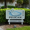 Pelican Preview Image